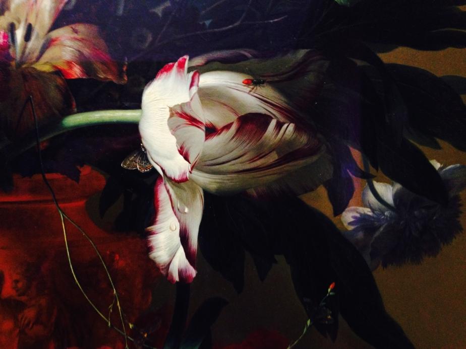 dutch-tulipe